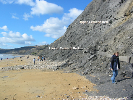 Upper and Lower Cement Beds at Charmouth