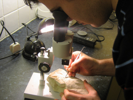 Roy Shepherd uses a microscope and steel probe to expose a fossil