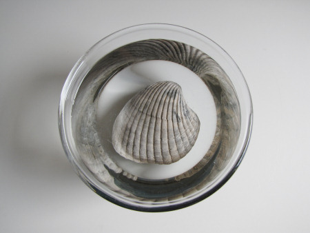 Fossil submerged in water to remove salt