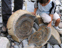 Discovering Fossils home page image 1