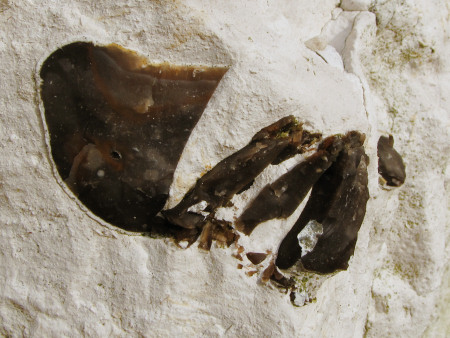 Shattered flint in situ at Seaford Head
