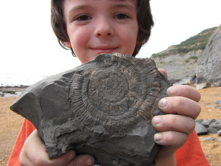 Fossil Prodactylioceras ammonite from Seatown