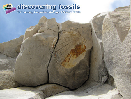 Beachy Head fossil wallpaper